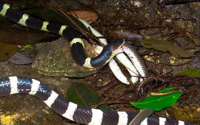 国内常见的五种毒蛇, 如果不幸遇见了, 最好迅速离开