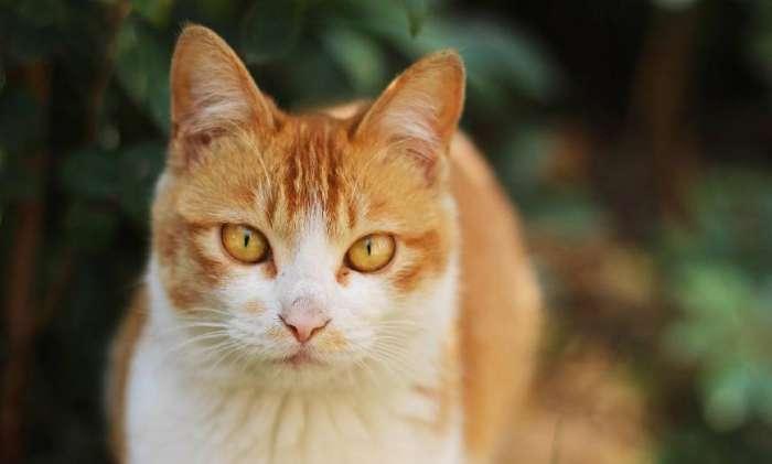 哥哥撸bt种子下载_兵哥哥撸猫有一套, 摘了手套轻柔抚摸, 橘猫躺在怀里一脸享受