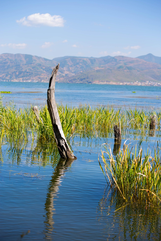 如果洱海没有被污染,七夕这一天云南大理一定被情侣挤爆