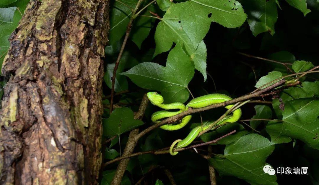 常见的有眼镜蛇,金环蛇,银环蛇,青竹蛇,禾花蛇,泥蛇,红头蛇,黄水赢蛇