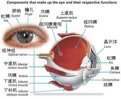 眼球摘除植入义眼台手术后放入眼内的通明塑料片有什么浸染