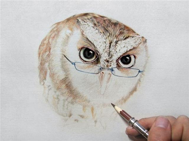 无基础彩铅画入门教程工具推荐,彩铅画猫头鹰手绘教程