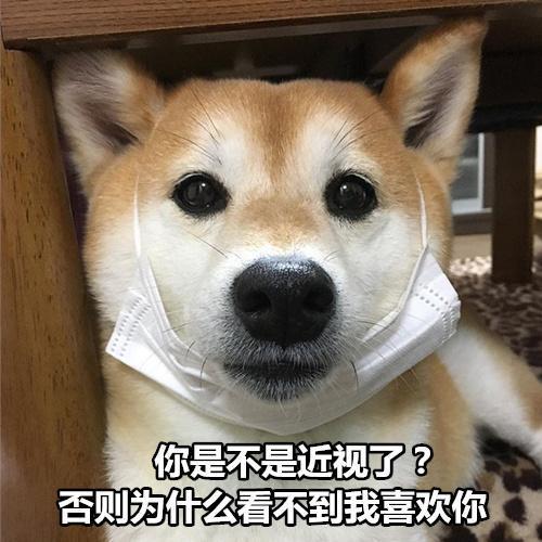 柴犬撩妹表情包:你知道我最喜欢什么制服吗?被你制服图片