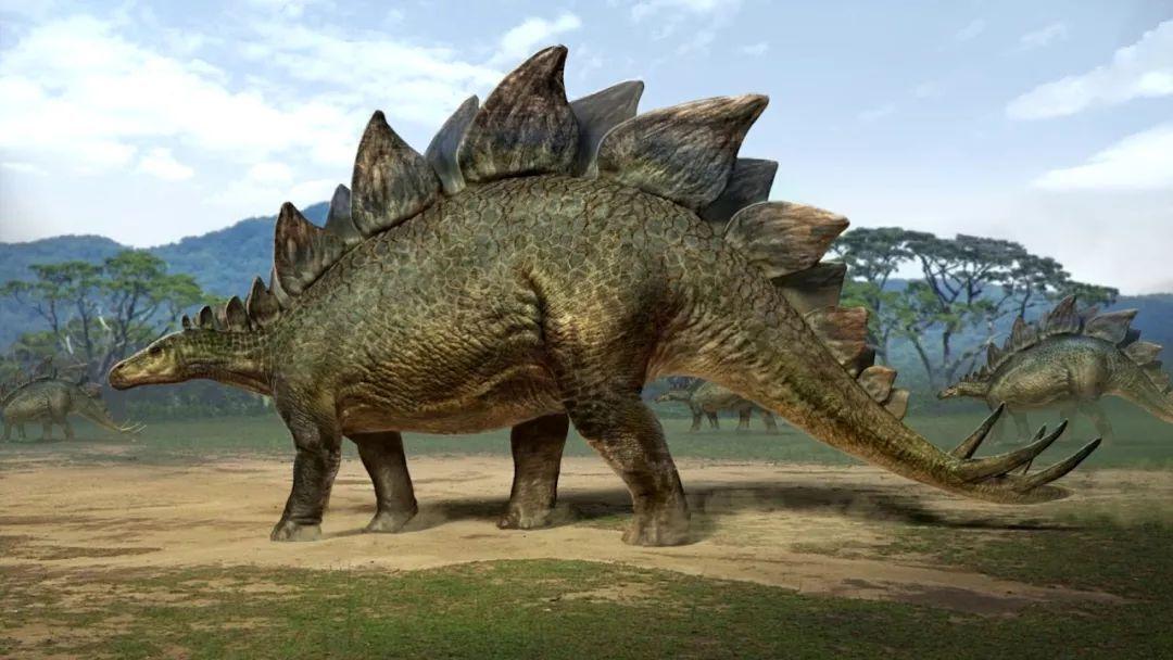 人们热衷讨论它和霸王龙之间谁更厉害,其实这是不可能的,是恐龙版的