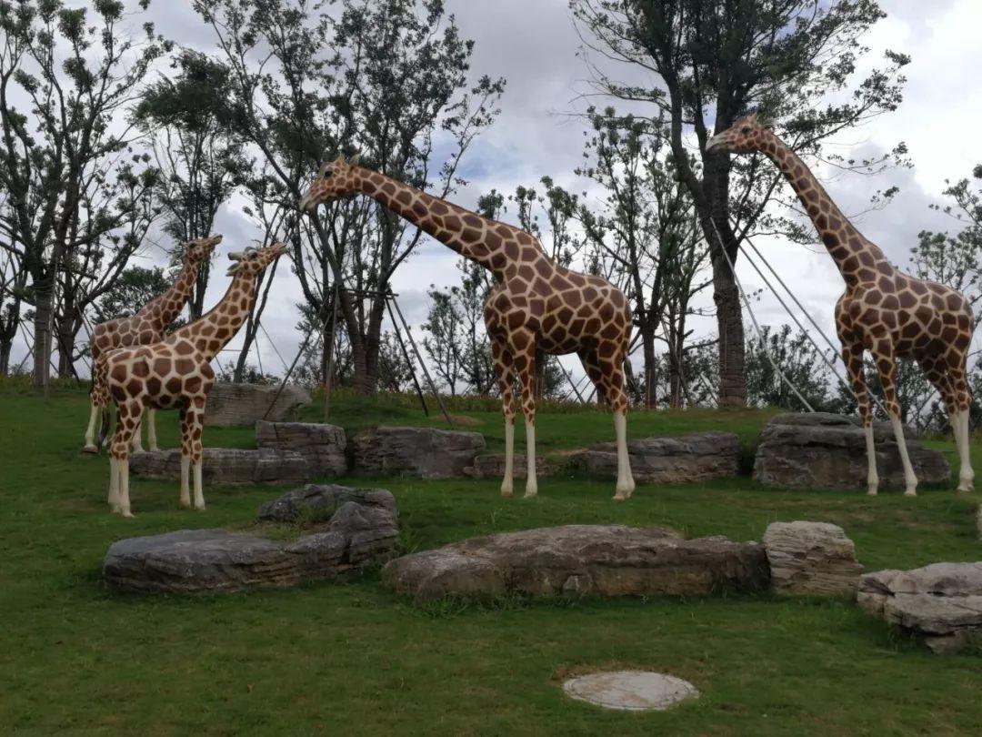 """公益 正文  正在筹建中的南通森林野生动物园 有一些动物""""热死了""""?图片"""