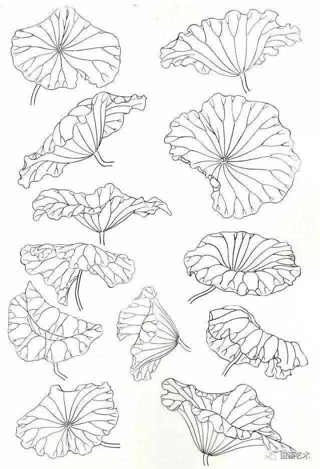 工笔荷叶的各种画法图文详解,工笔画荷花步骤,工笔荷花染色教程图片