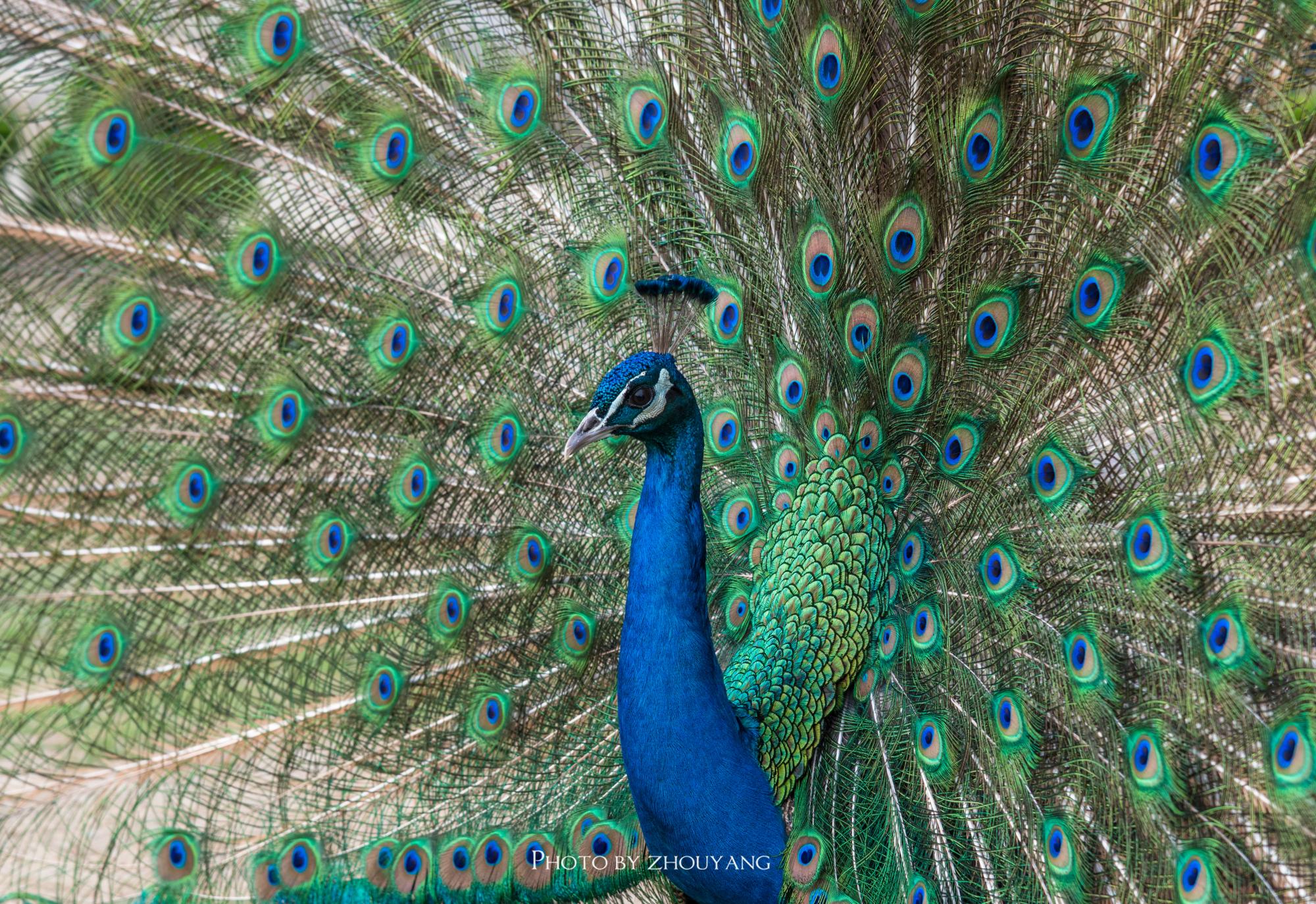 宿迁的百鸟园,被一张大网笼罩,数百种鸟禽却能和谐相处