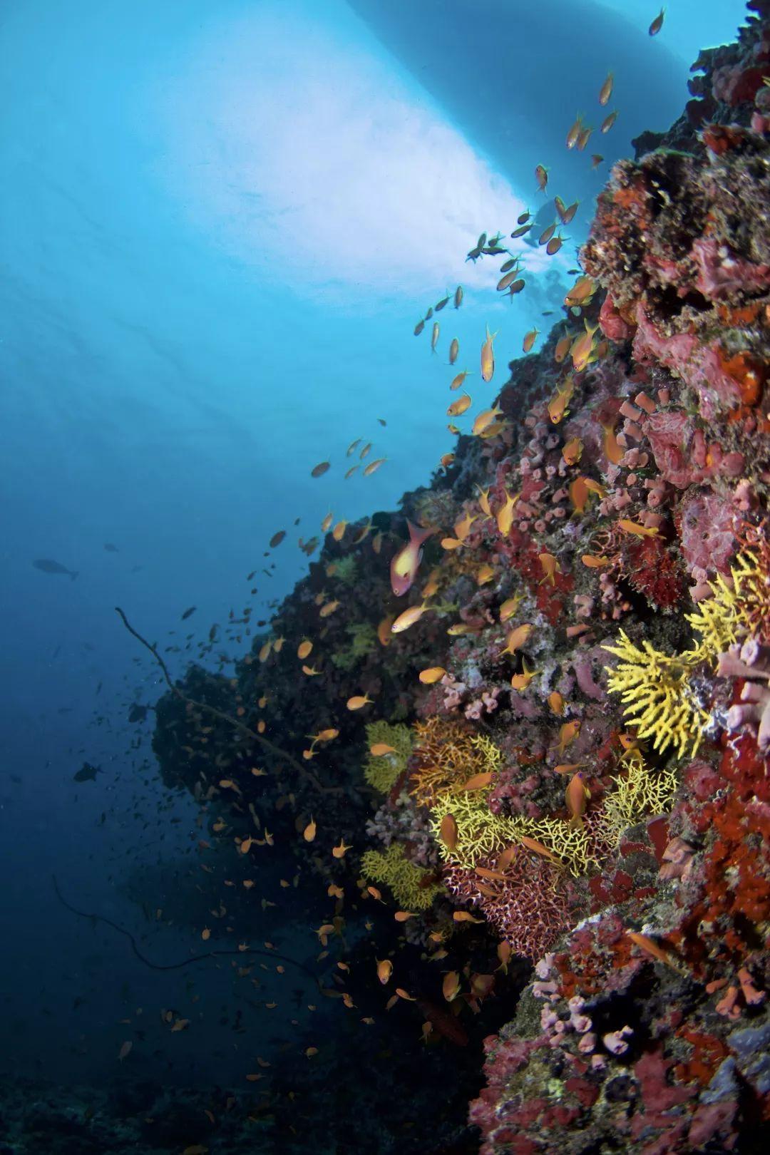 潜入自由之海