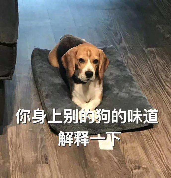 你是不是有别的狗了_这一定是你养狗,最最最最幸福的瞬间!