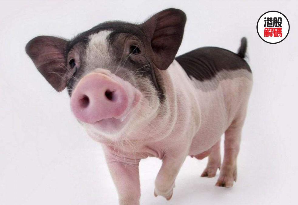 """""""贸易战""""、下行的猪价、非洲猪瘟,万洲国际今年频遭""""水逆"""""""