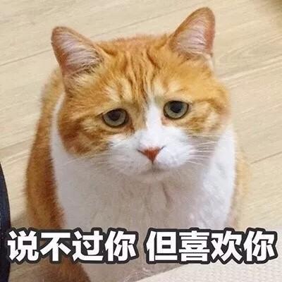 做梦笑醒_撩对象表情包猫咪版本:做我的女人,保证你做梦都笑醒