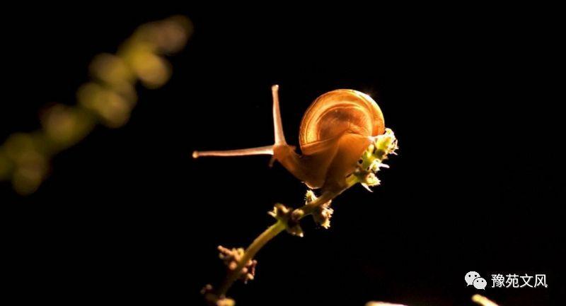 赶,赶,催 ,催。 我总是嫌他们慢,慢,慢。 原来我从没有走进他们的世界,欣赏他们的风景,只是牵着他们的触角,呵斥、催促、甚至想在屁股上踹一脚。 雨不仅清洗了空气,也清洗我的心灵,小小的蜗牛给我上生动的一课,只有静下心来,执著,努力,慢一点,就能快乐前行。 对于前行路上遇到每一个人,无论是谁,都要温柔以待,相互碰碰触角,用最朴实真诚的语言,等等你,再等等自己。 附儿歌一首: 小蜗牛 滴答,滴答 小雨优哉游哉下 一只小蜗牛 探出小脑瓜 两只小触角 身小壳子大 温润空气里 草茎当树爬 哼哧哼哧 我爬上大树了