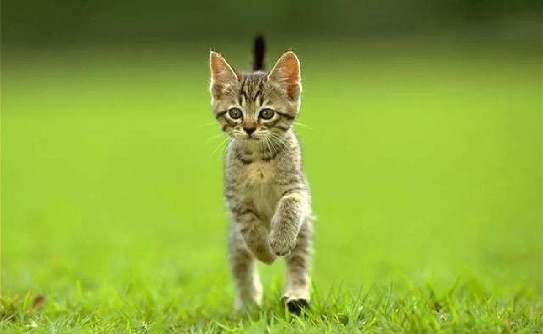 怎么看待小区流浪猫喂养