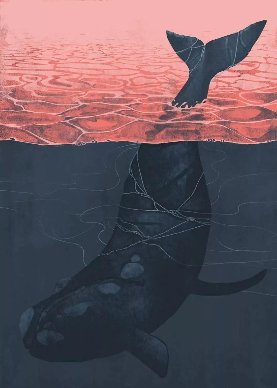 鲸鱼游过他死去的地方
