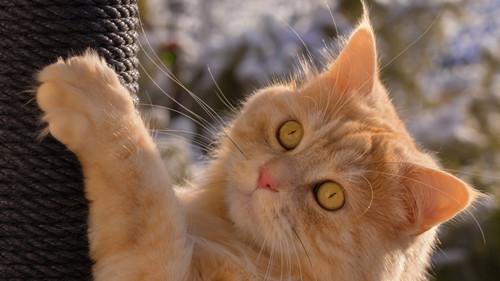 母猫补营养罐头,母猫要吃什么营养罐头