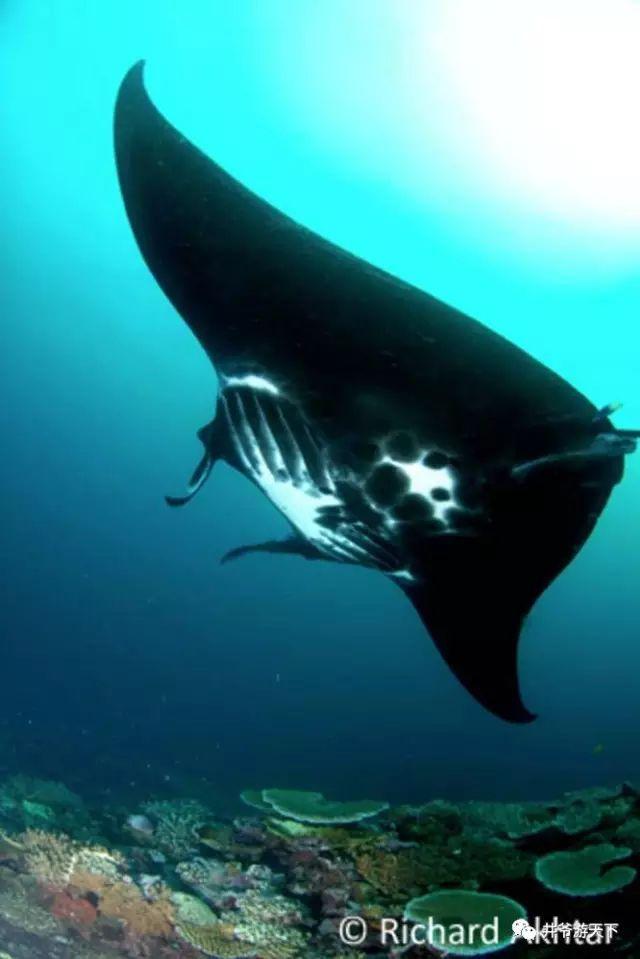 《孤独星球》评选的几种最奇妙的海洋邂逅,你经历过几回?