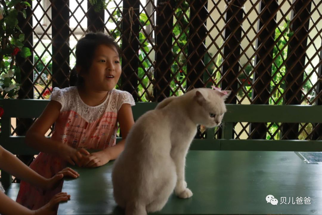 撸经典小�_中国撸猫小史和古画中的那些猫