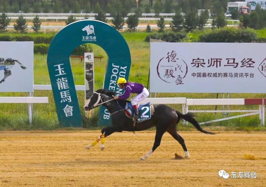 【花和尚专栏】它就是世界上最快的纯血马!