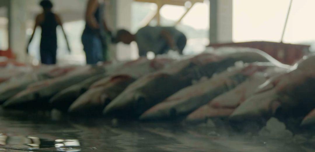 那些血腥猎奇的鲨鱼片还要骗我们多久