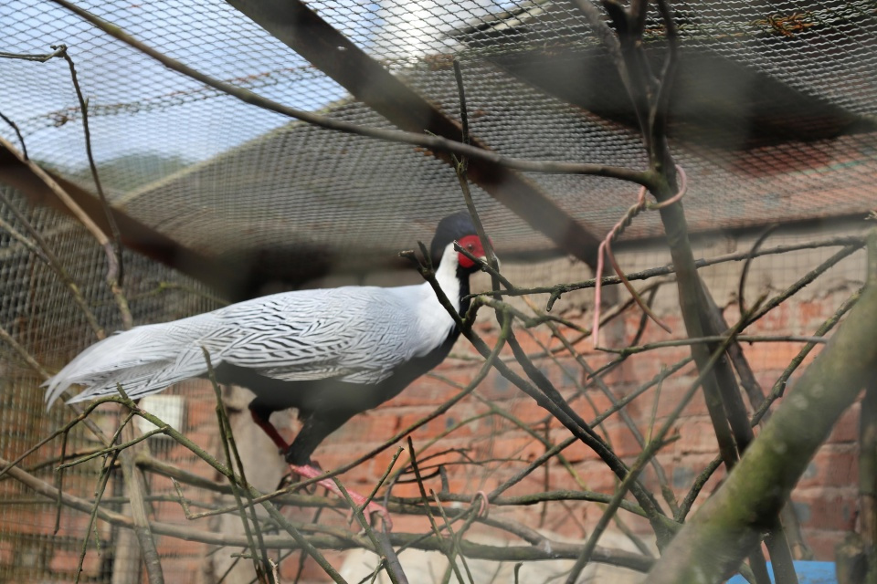男子山里捡回鸟蛋孵化 养成4只漂亮的大鸟却犯了法