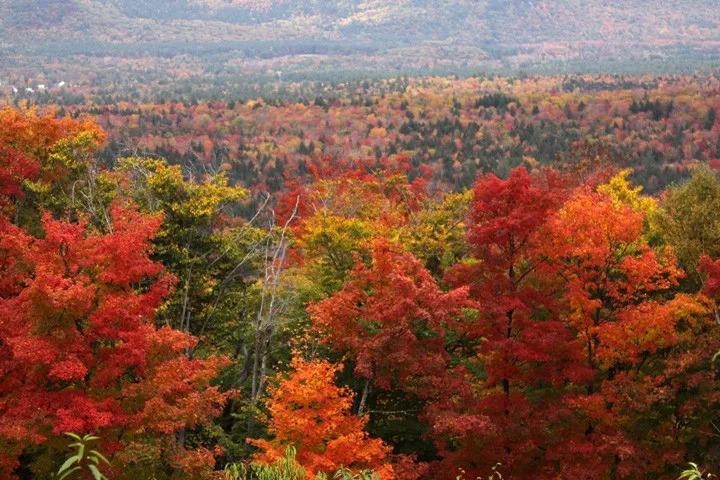 """沿途枫叶开得火红,坐看""""枫""""景,将新英格兰最美的秋色尽收眼底.图片"""