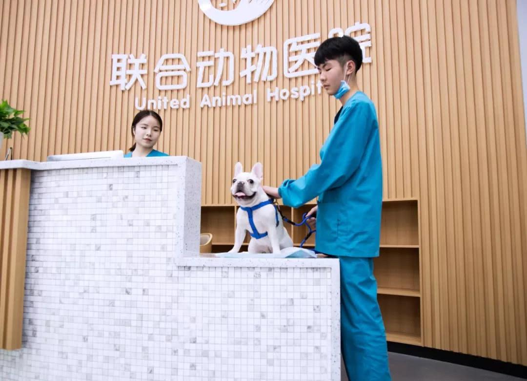 宠物病历本_实地探访每天接诊超过60例的顶级宠物医院是这样的!_动物医院