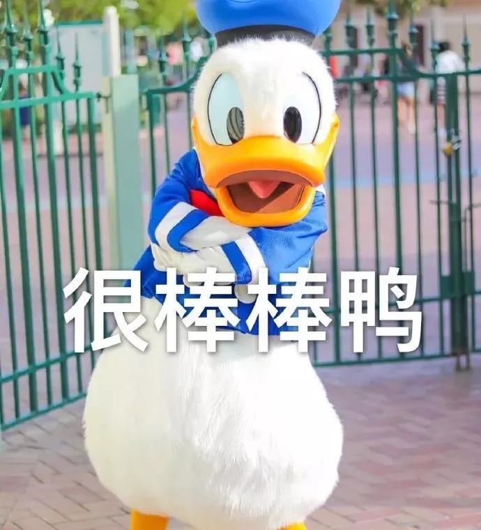 宠物 正文  鸭界人才辈出 网红是一波又一波 有新进的新秀- 冲鸭表情图片