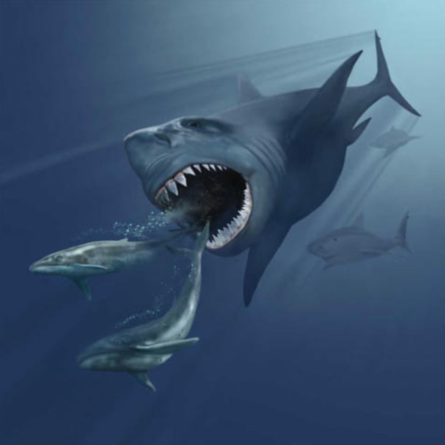 《巨齿鲨》可能真的不懂巨齿鲨_鲨鱼