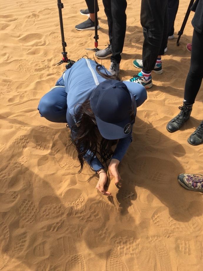 人美胆子大 程潇沙漠徒手抓蜥蜴就问你怕不怕 娱乐八卦 图5