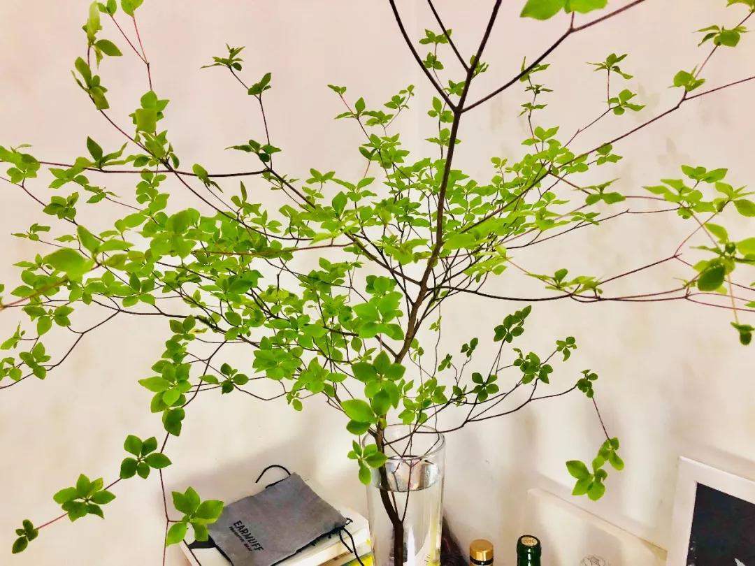 买花买草买爱上,情趣家里的小角落树枝奇葩1大会图片