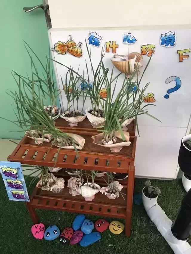 小小传承人:幼儿园植物角新玩法,让种植成为孩子探索自然的起点