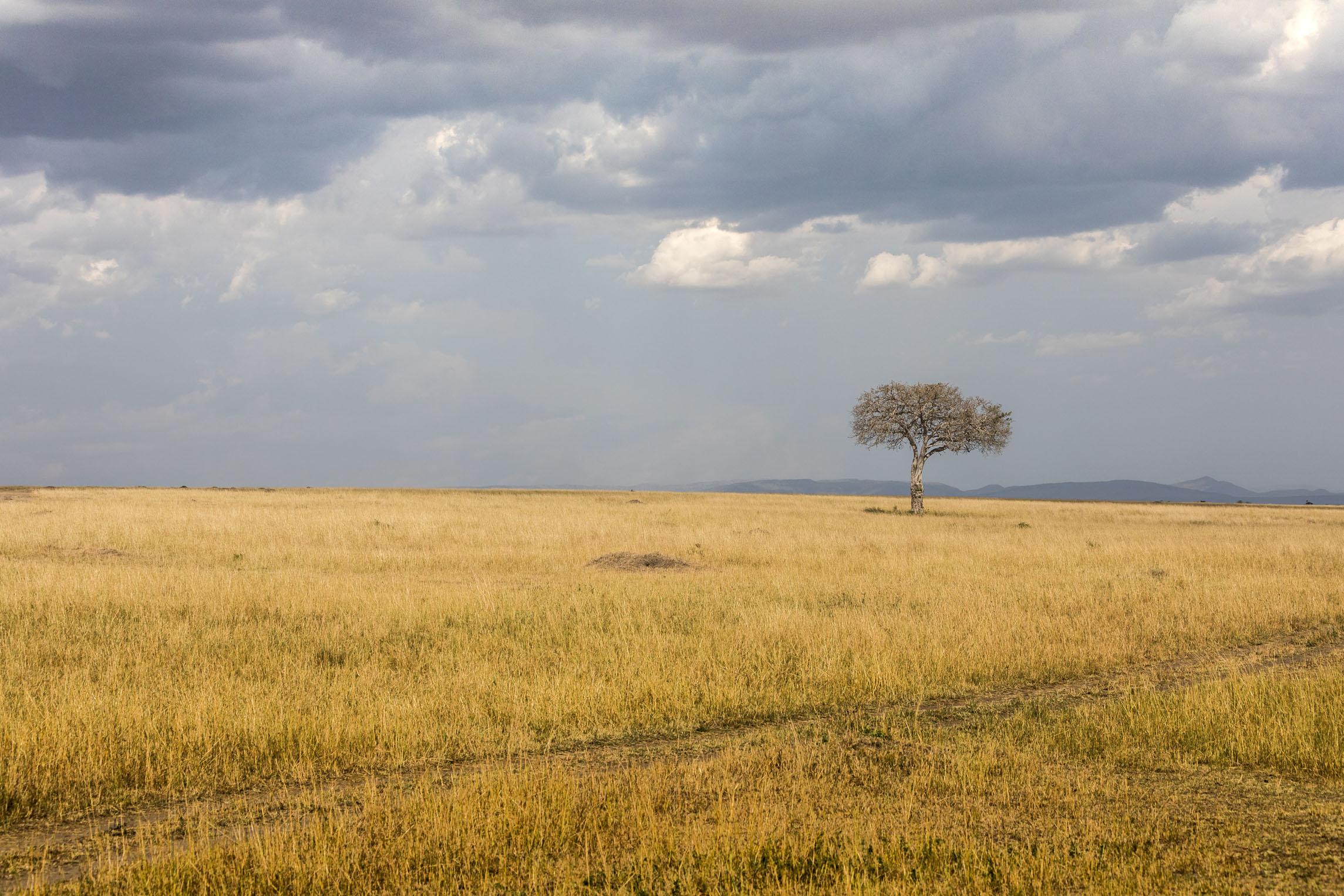 博茨瓦纳:非洲最民主国家之谜