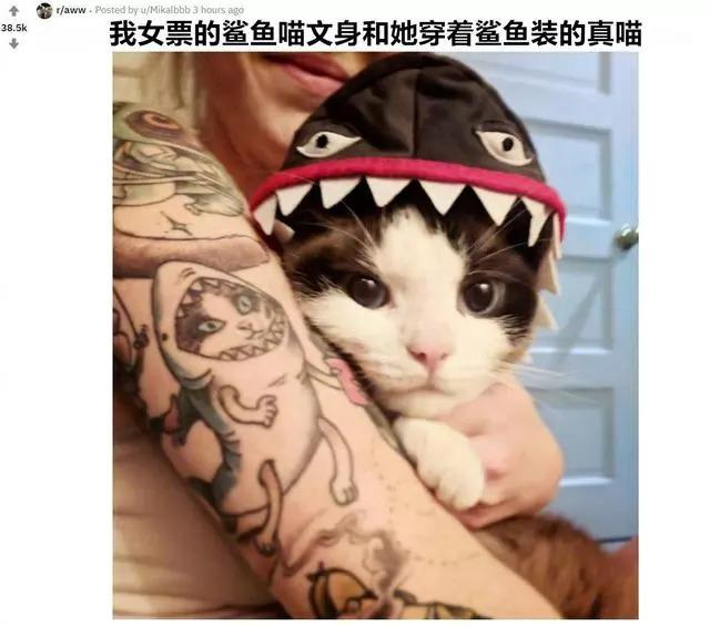女主帶著貓咪去了紋身店,爲給貓咪特殊的禮物,只是苦了紋身師