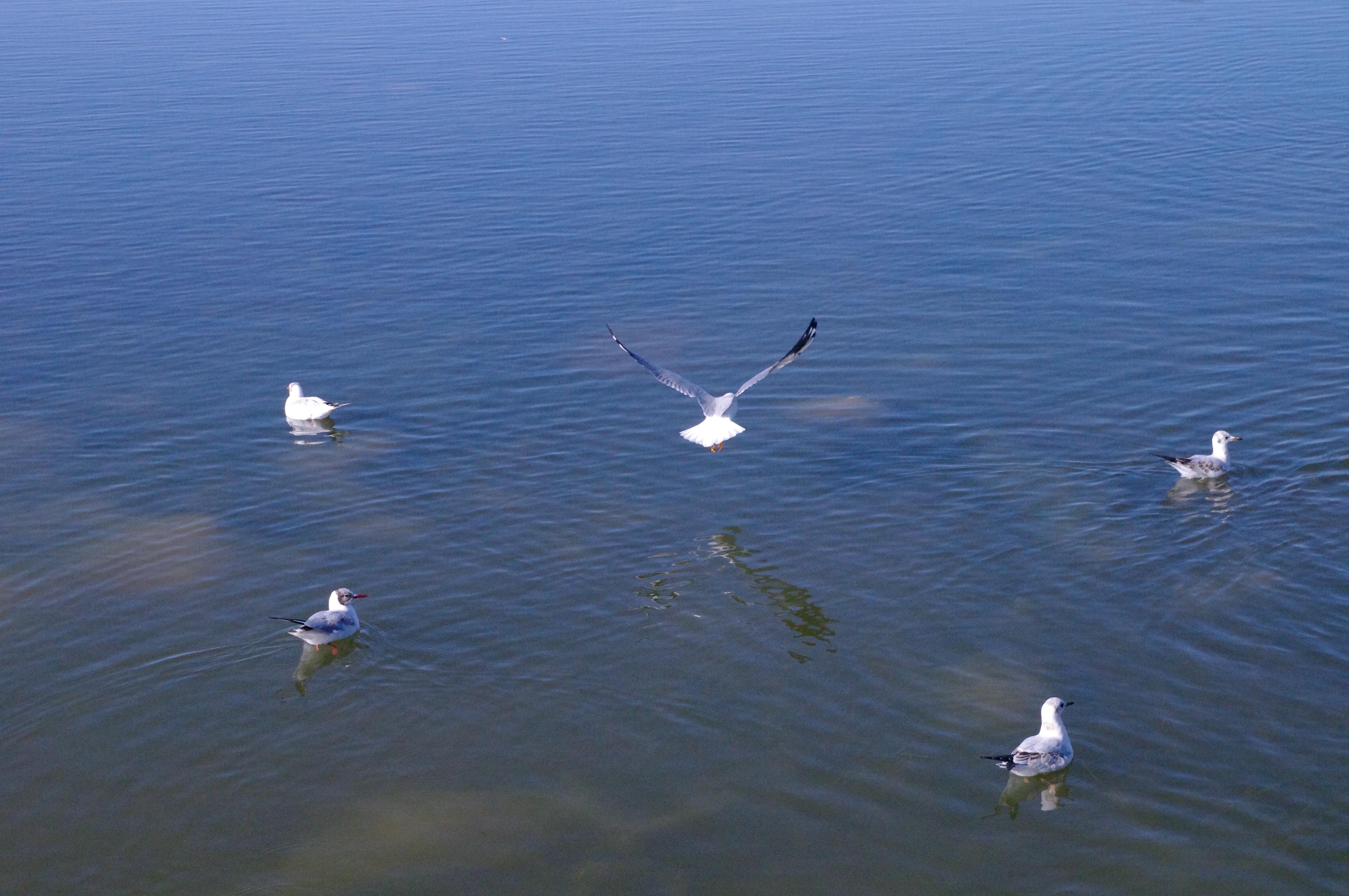 雪山,湖泊,河流,白天鹅....巴音布鲁克草原,除了苍茫,还有这么多的美