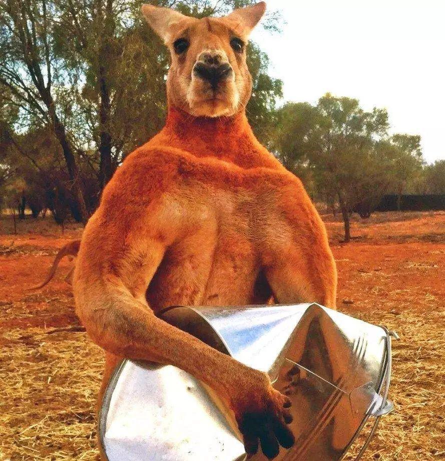混在澳洲当土豪-混在澳洲当土豪最新章节-混在澳洲当土豪免费阅读