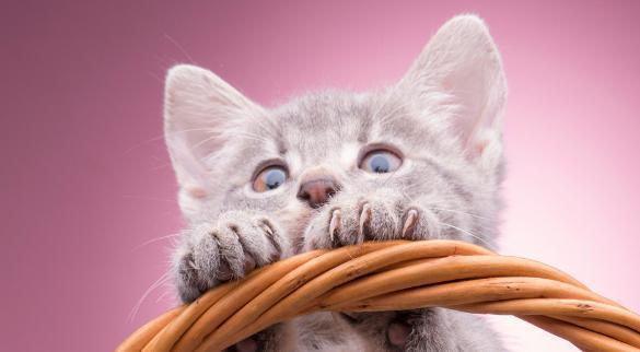 猫咪呼吸声像有痰呼噜图片