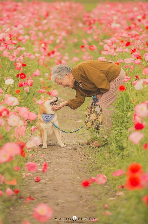 日本小哥給奶奶和家裡的柴犬拍攝了一組照片,看完心都要被暖化了… 萌寵 第7張
