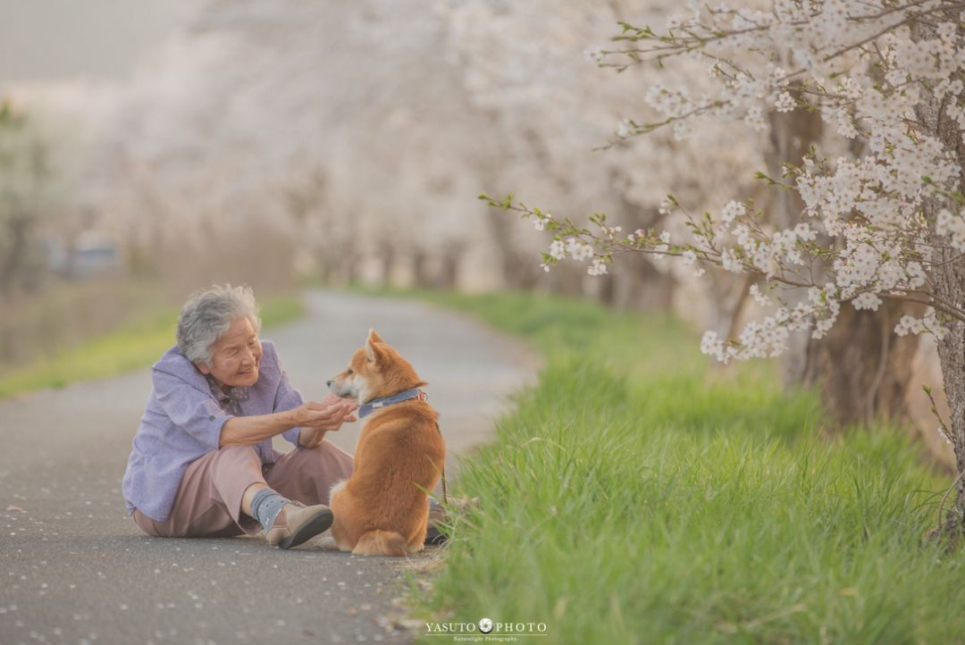 日本小哥給奶奶和家裡的柴犬拍攝了一組照片,看完心都要被暖化了… 萌寵 第4張