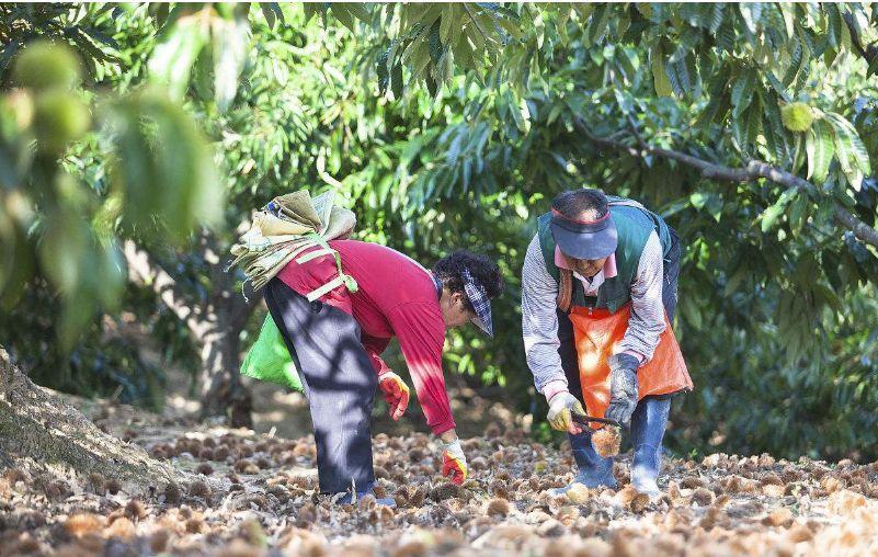 河南这5项活动入选首届中国农民丰收节!