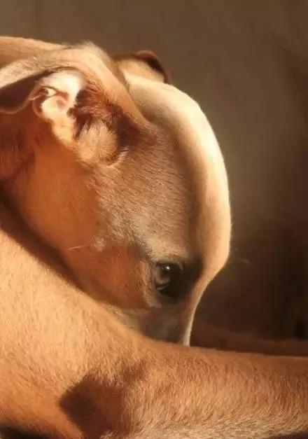 狗怀孕b图_b抢镜!自拍!45度仰望!狗子可能是比你还爱拍照的存在