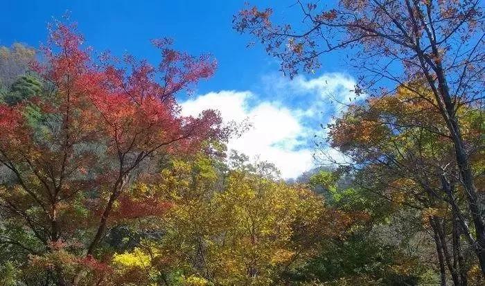 秋色胜春朝的时候,和家人朋友一起来王顺山欣赏大自然美丽奇幻的风光