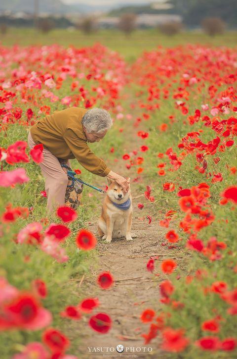 日本小哥給奶奶和家裡的柴犬拍攝了一組照片,看完心都要被暖化了… 萌寵 第8張