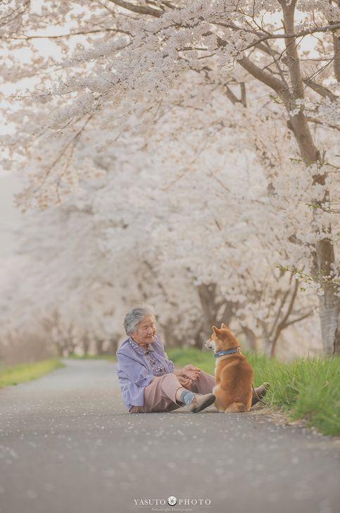 日本小哥給奶奶和家裡的柴犬拍攝了一組照片,看完心都要被暖化了… 萌寵 第3張