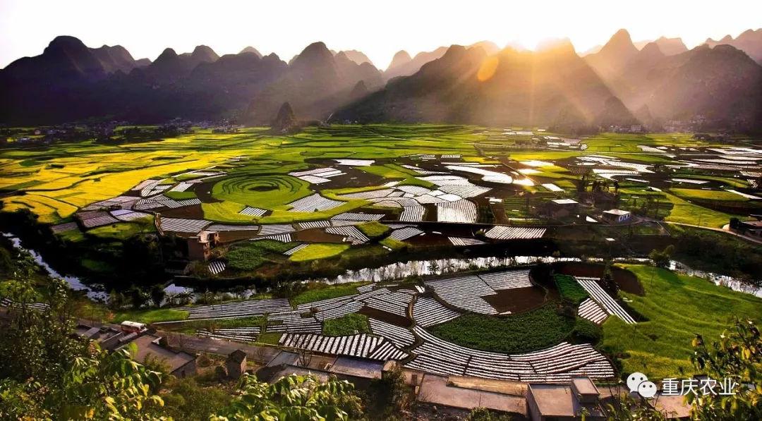 重庆深度调整农业产业结构 助推现代山地特色