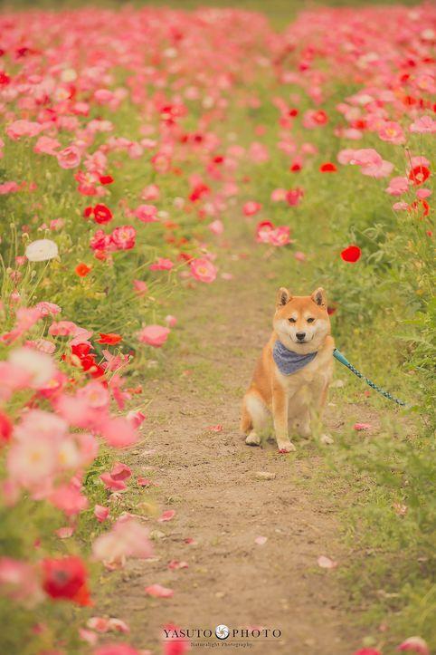 日本小哥給奶奶和家裡的柴犬拍攝了一組照片,看完心都要被暖化了… 萌寵 第9張