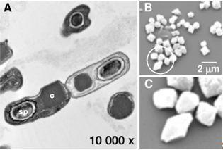 bt无码动物下载_专家原创科普(9)|能抗虫的bt蛋白安全吗?(附音频)