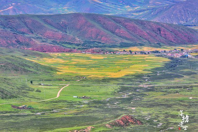 达坂山观景台,不仅可以看到油菜花海,更是俯览美景的绝佳地点