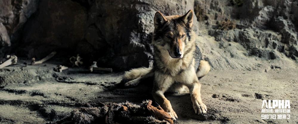 《阿尔法:狼伴归途》曝点映口碑特辑 史诗震撼满场好