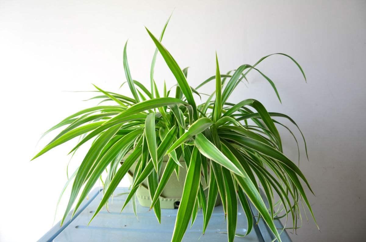 摆在办公桌上的功能绿植!