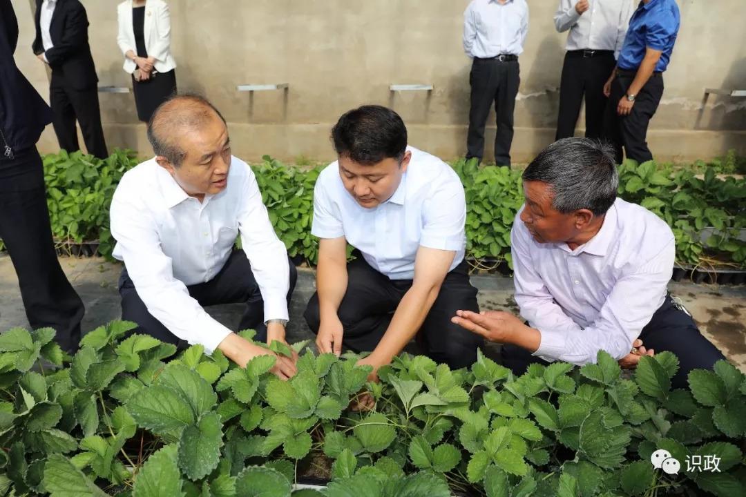 习近平总书记惦记的巴林左旗笤帚苗,还有一番北京故事图片